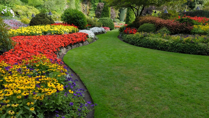Garden with bright multi colored flowers and a lawn